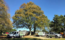 Commercial Tree Management and Maintenance